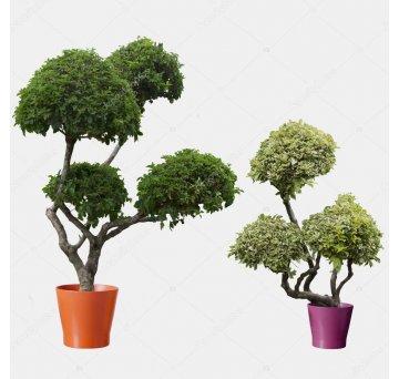 Муляжи деревьев и кустов