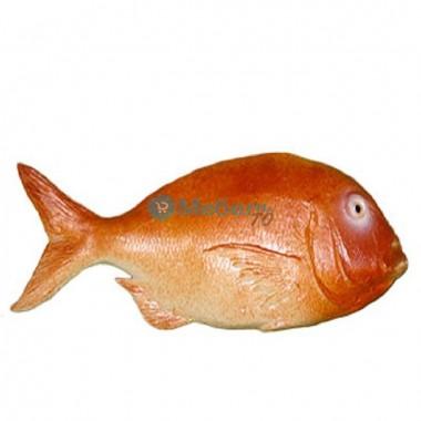 Муляж морской рыбы