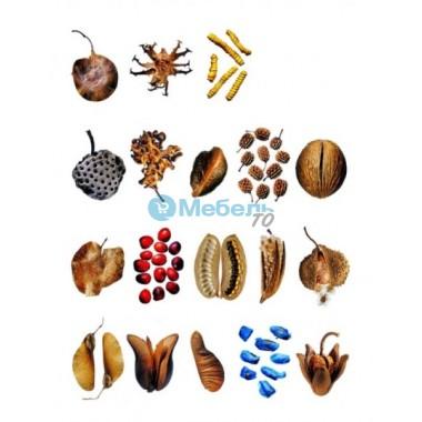 Муляжи искусственных семян, плодов и грибов под заказ