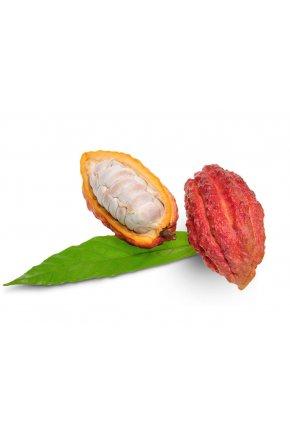 Искусственный плод какао муляж